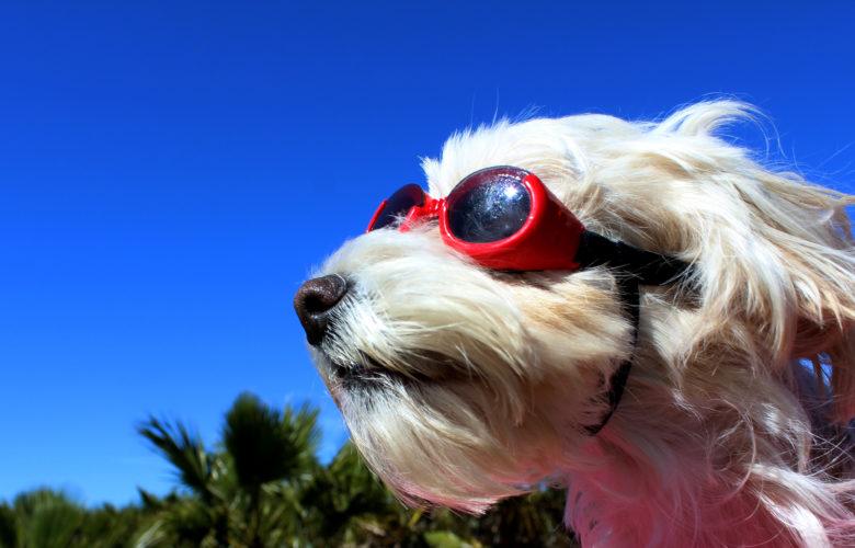 Reiseübelkeit-beim-Hund